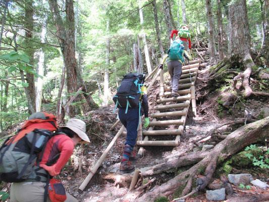 急登の一部には、丸太の梯子もあり