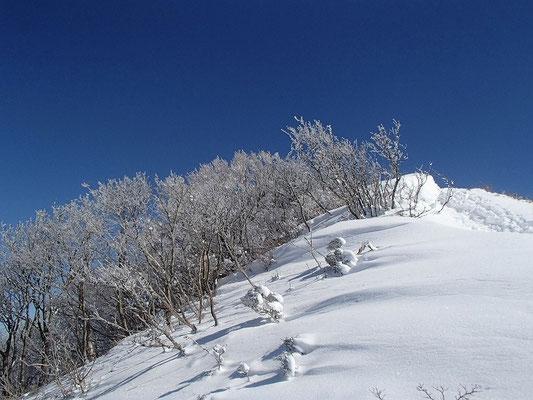 北西の斜面は樹氷原になってました