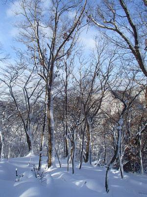 青空がバックだと、雪景色が一段と美しい