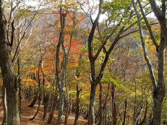 T字尾根は紅葉真っ盛り