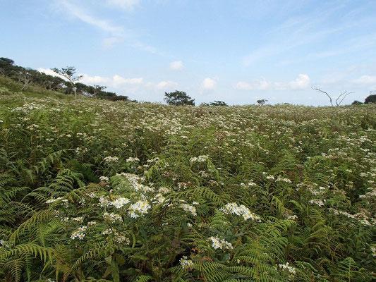 その高原はお花畑状態でした