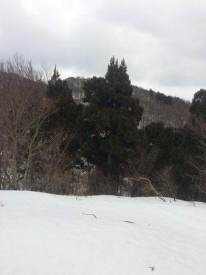 1019p804から山頂が見える