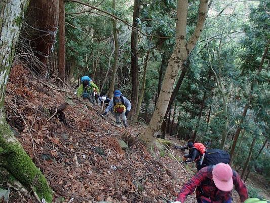 伊藤新道ではなく白滝山の北尾根をよじ登ります