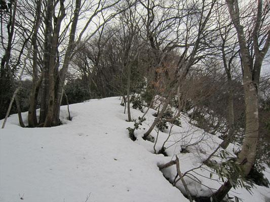 林道から取りついた尾根は、こんな感じ