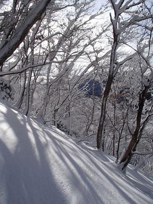 木々の枝にも雪が積もり、辺りは白銀の世界