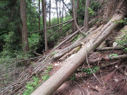 まっすぐな登山道を遮る倒木