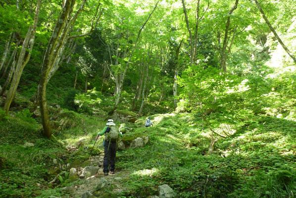 7.木々の緑がまぶしいが段々急登