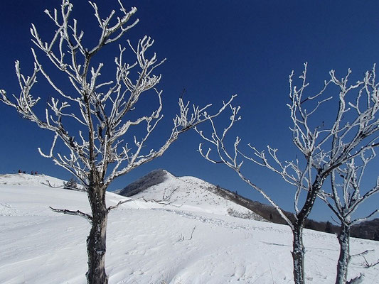 これも樹氷です