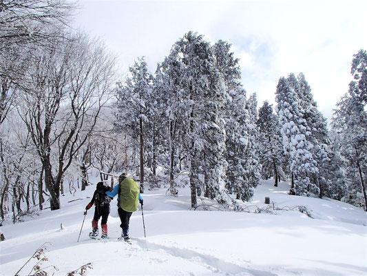 植林された針葉樹も雪が積もるとなかなかきれい