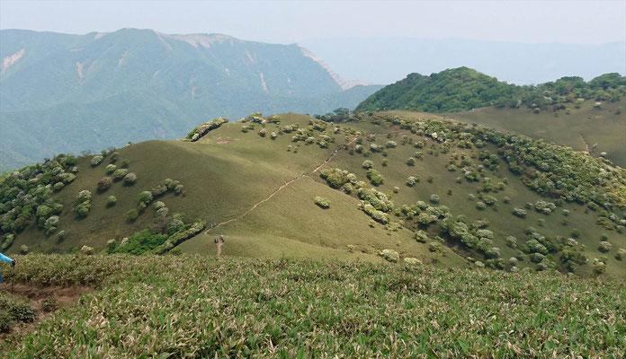 羊(シロヤシオ)の放牧場と後ろに藤原岳