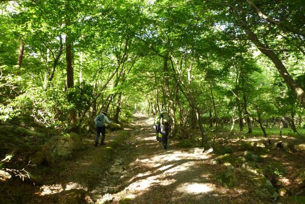 4.メルヘンの雰囲気の漂う林を歩いて
