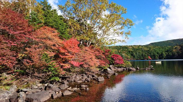 そろそろ、紅葉も見ごろを迎えます。