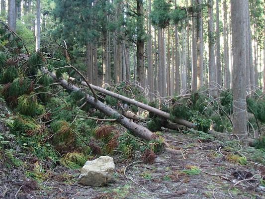 台風の爪痕が残る林道