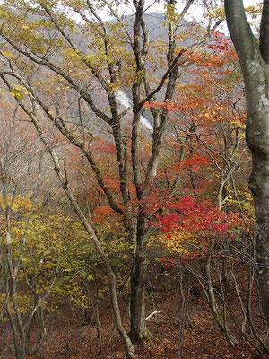 土倉岳から先も紅葉が見られました