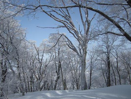 標高を上げると雪を被った木々のいい景色が。