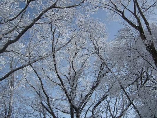 青空と樹氷と。