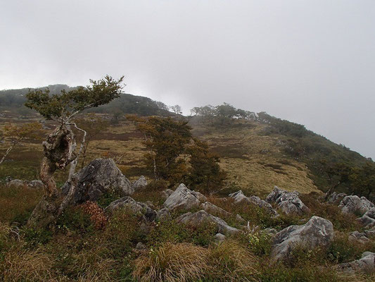 最後の急な登りを越えて、御池岳テーブルランドに到着