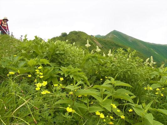 高山植物と爺が岳と登山者 (我メンバーです)