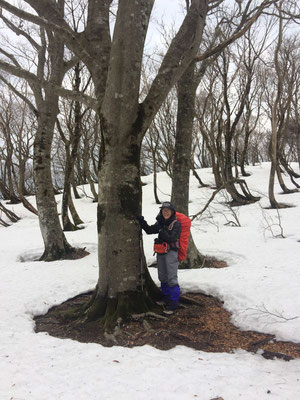 0942尾根に巨木ブナ