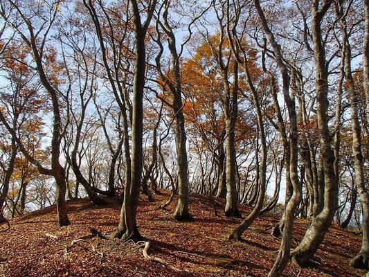 1000mを超えると紅葉は過ぎ、落葉した樹が多くなってきました