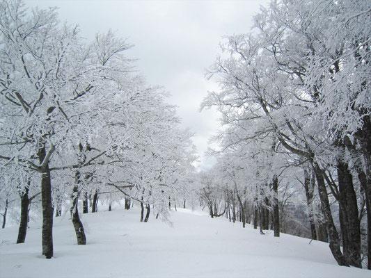 山頂へ続く樹氷街道