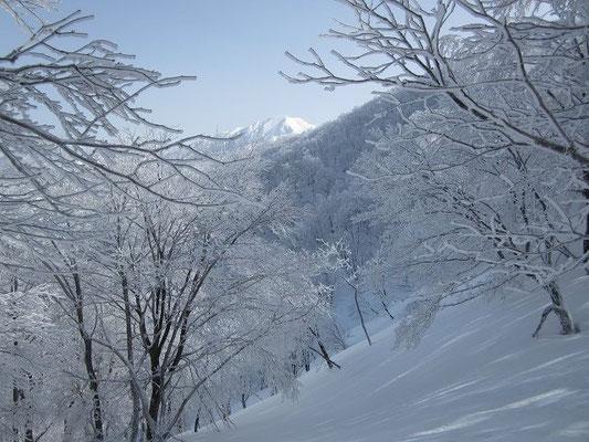 樹氷の奥に荒島岳。このあと、グングン近づいてきます。