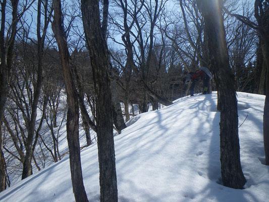 長い植林地を抜けやっと広葉樹林の尾根へ出た