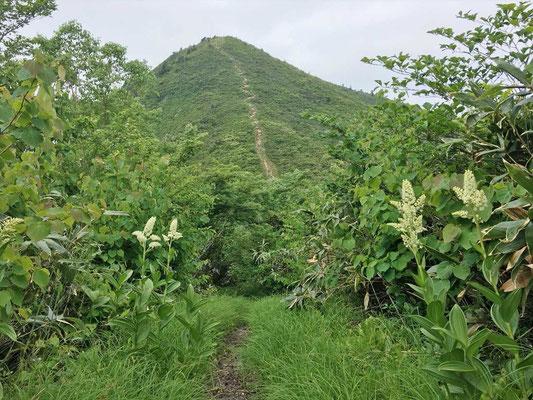 井岸山(1,400m)から少し下りた地点から平家岳