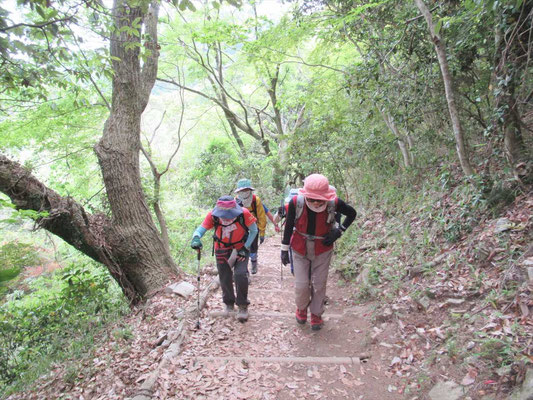 さあ、摩耶山への最後の登りです。ガンバ