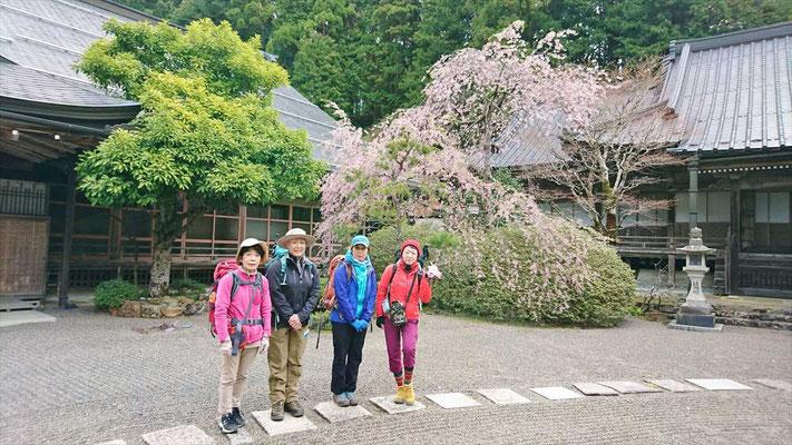 本堂(一度も焼失していない)と枝垂桜