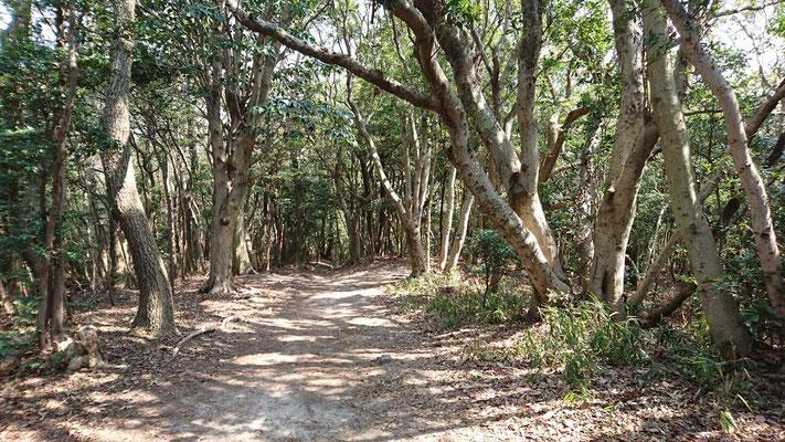 常緑広葉樹の登山道