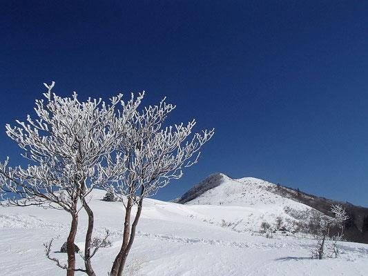 樹氷と武奈ヶ岳