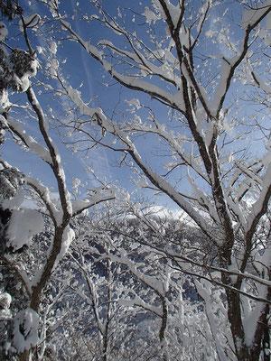 雪景色を楽しみながらさらに登ります