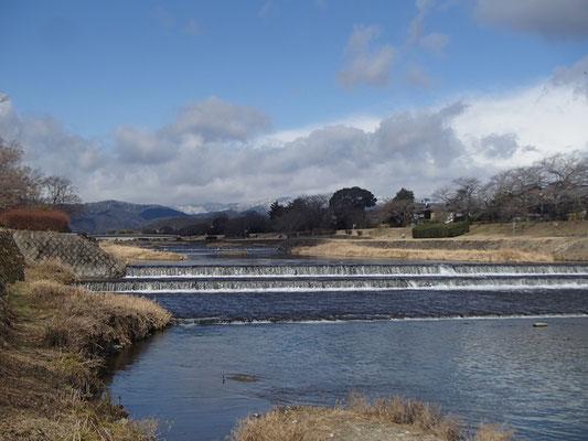 加茂川を植物園まで歩く