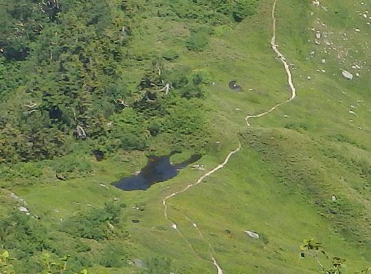 クワガタの池(上から見るとクワガタの形してます)