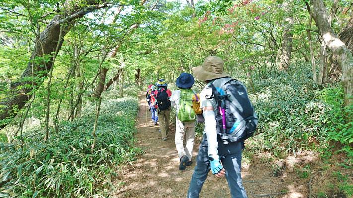 新緑の縦走路を六甲最高峰へ