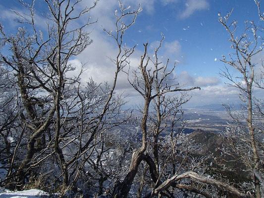 強い風で、樹氷が散り、舞っていました
