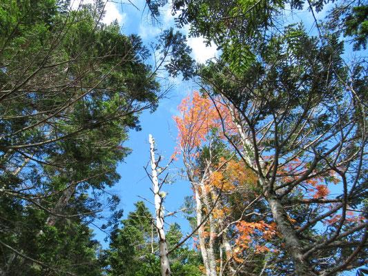 紅葉と青空と緑と。