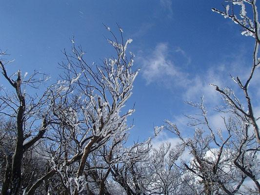 よく見ると、霧氷や積雪ではなく、樹氷です