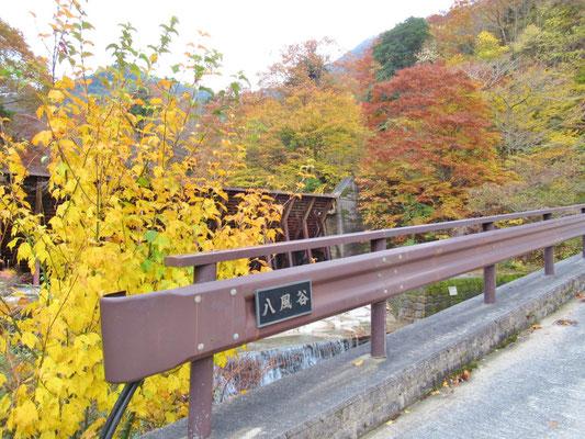 八風谷橋付近の黄葉を見ながら進みます
