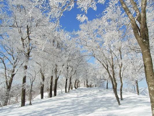 帰りは、シャラシャラと音をたて樹氷が落ちてきます