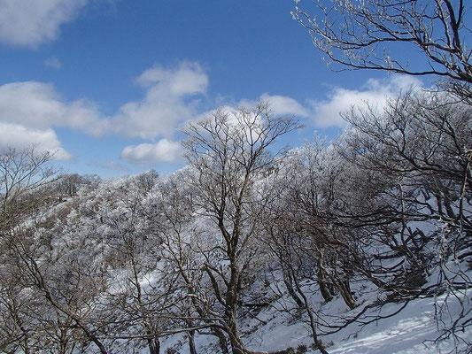 山頂が近づくと、枝先が白くなってました