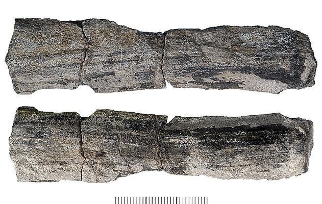 Abb. 17: Holzfragment, unbestimmt; Spirka Mb, Adelholzen Fm; Zementstbr. Rohrdorf (Photo Janssen 2008)