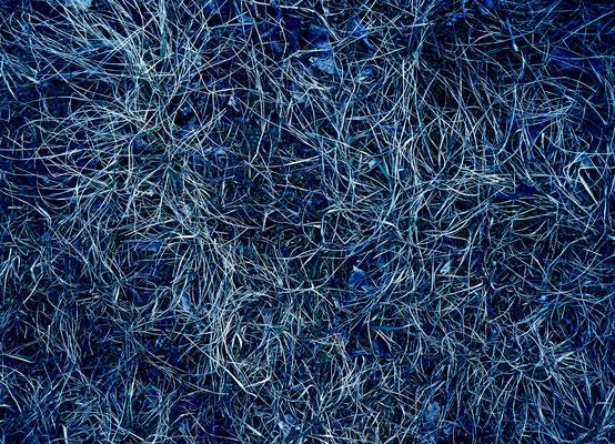 wintergras (c) chris tomas