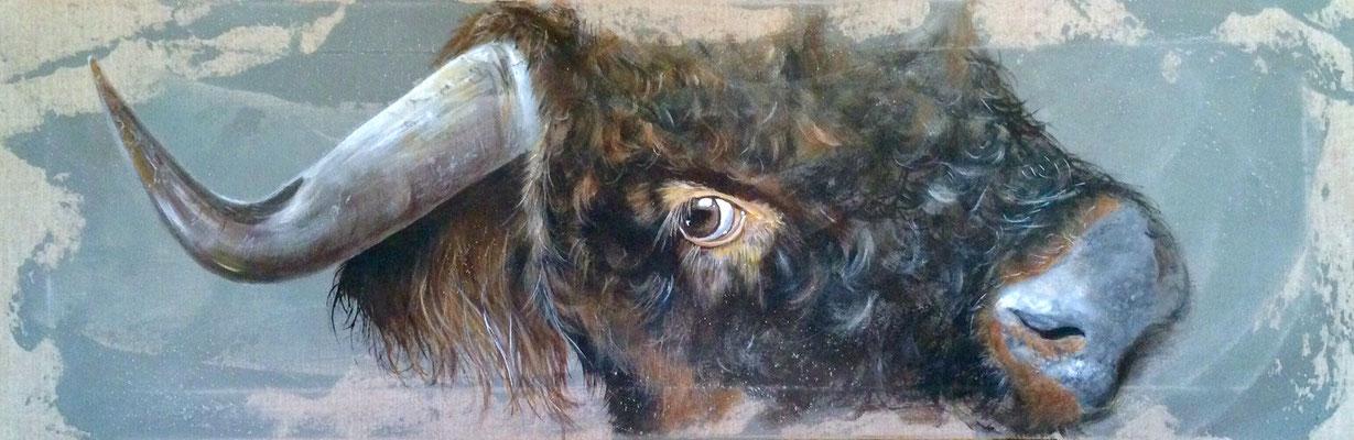 Jeune Taureau Highland