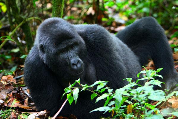Uganda - Pure Africa