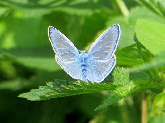 Schmetterlinge kartieren