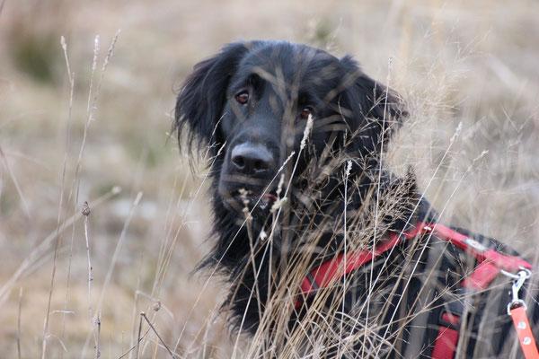 Athos *2012 - mit ihm bin ich auf den Hund gekommen