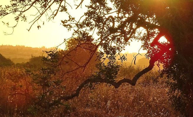 das erste Licht am Morgen, weich und betörend schön lässt es die Natur erwachen