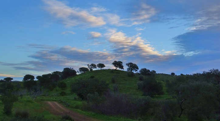 ein ganz charakteristisches Bild hier im hügeligen Hinterland, die Silhouetten der Bäume auf den Hügelketten